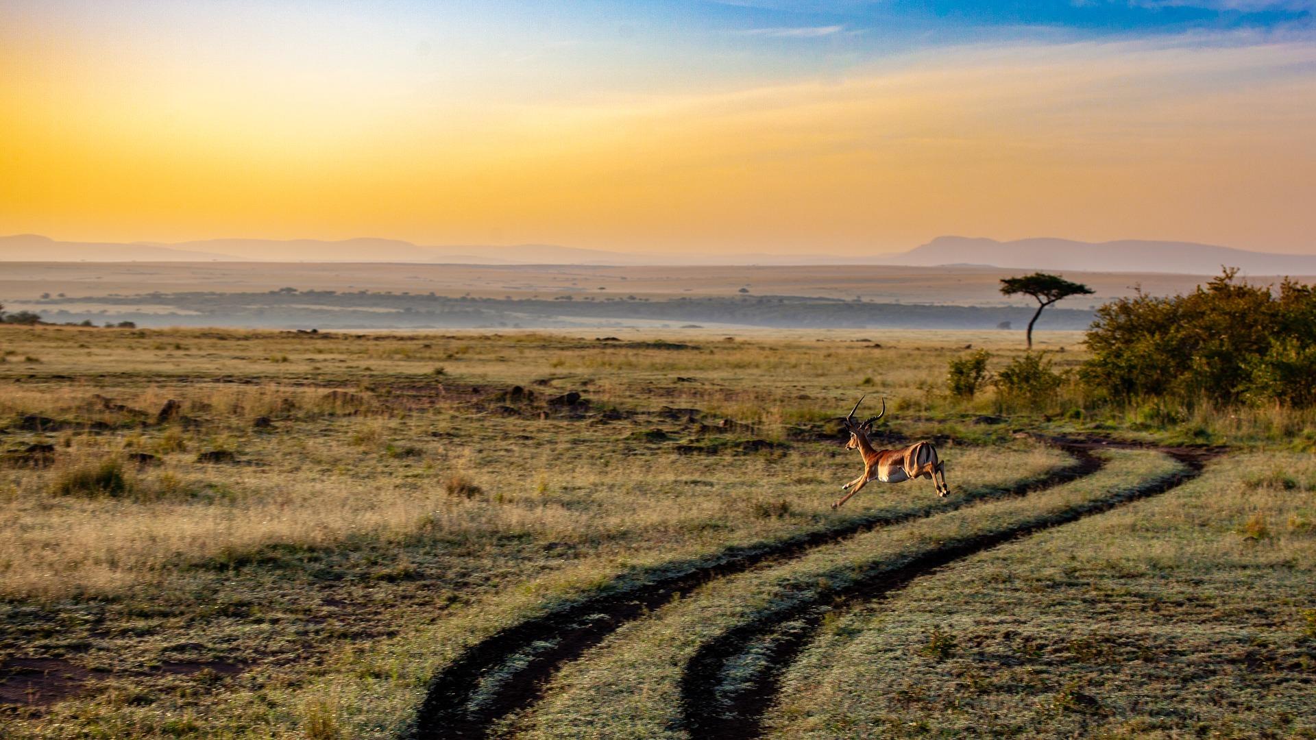 kenya paesaggio