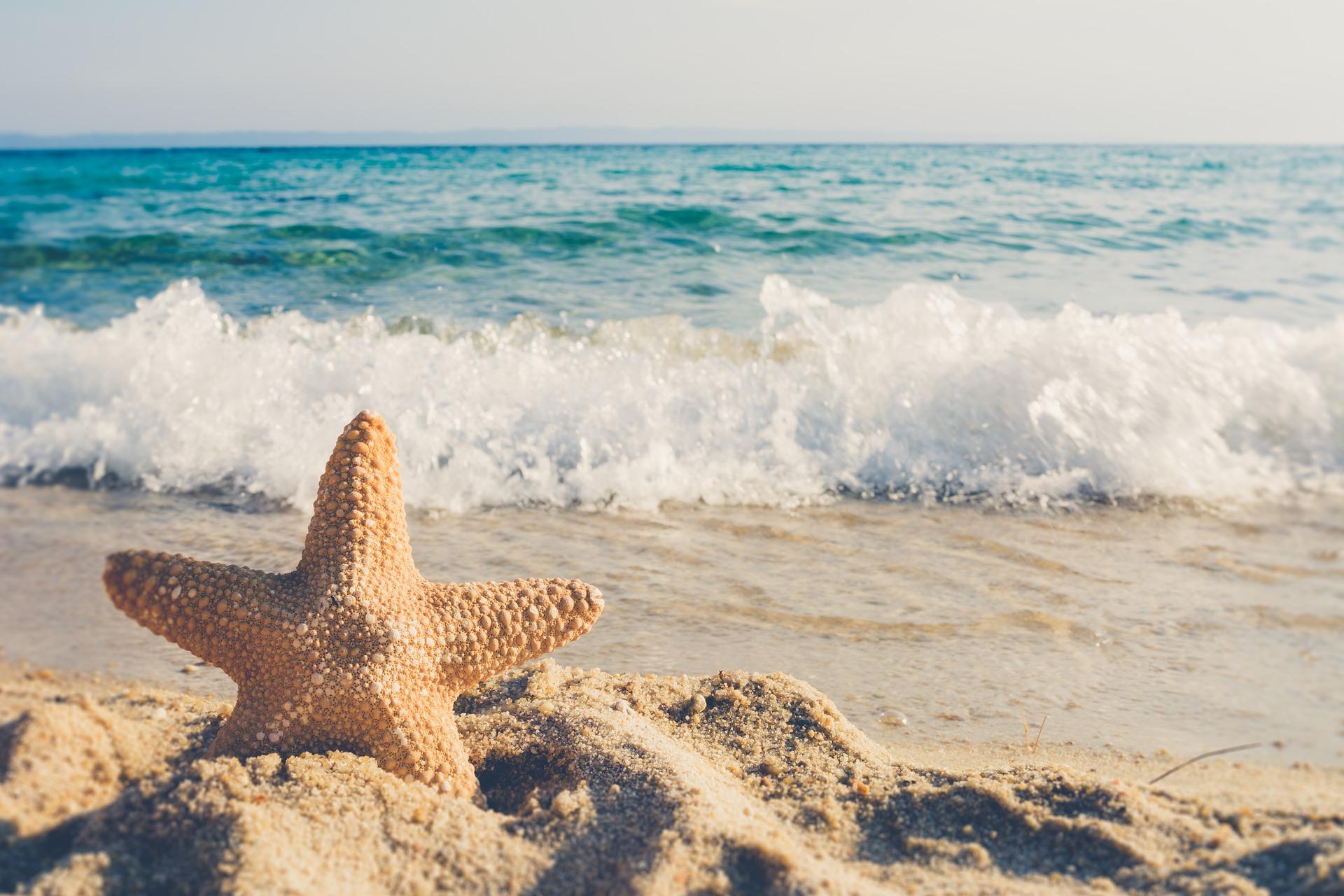 Clima, Spiaggia, Stella marina\