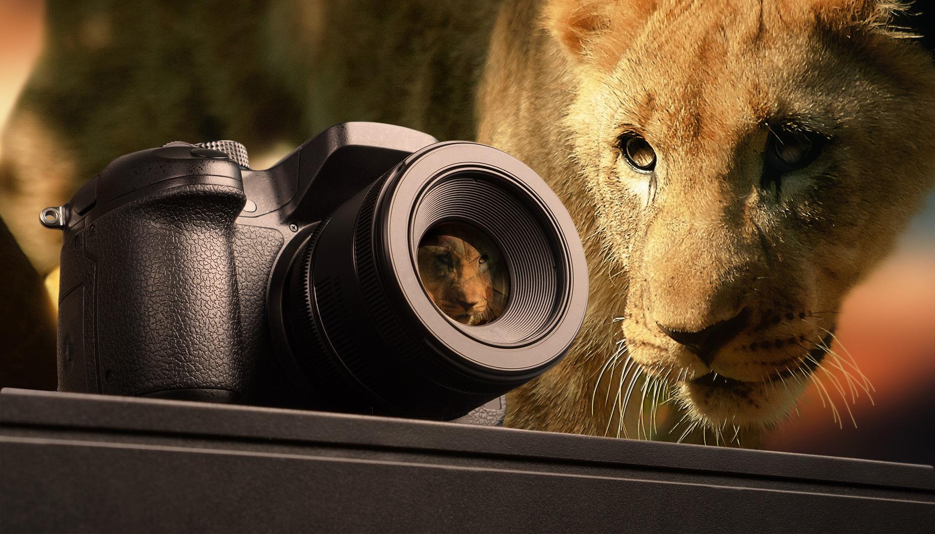safari fotografia