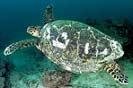 turtles point